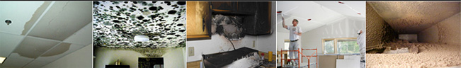 Mold water sewage damage image